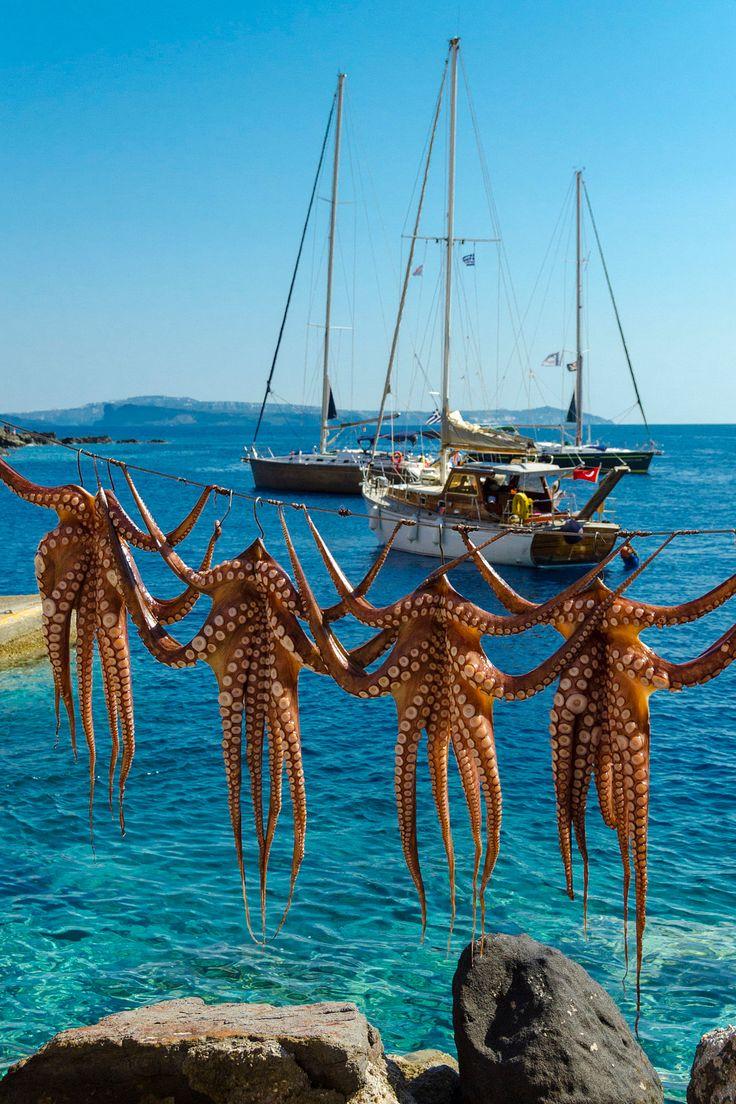 Octopus in the sun, Ammoudi port, Oia, Santorini