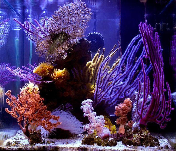 Non-photosynthetic coral nano tank.