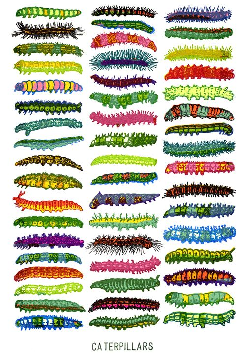 The Insect Art of John Dilnot - Caterpillars