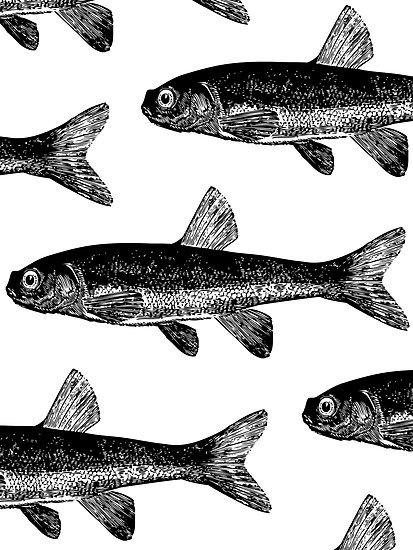 Black Fish Card & Prints | M  Bianchi