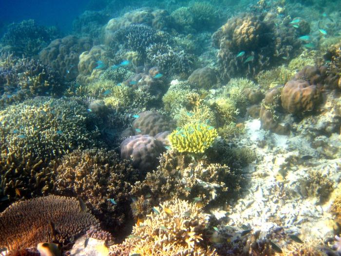 Coral reef at Seraya Island. Photo by Indra Febriansyah