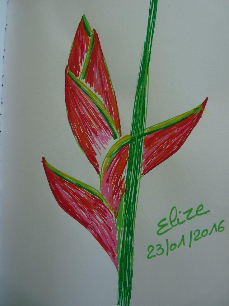 Plus De 1000 Id Es Propos De Fleurs Exotiques Sur Pinterest Dessin De Fleurs Cactus Et Pain