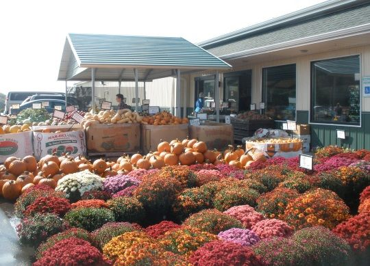 1000 Images About Amish Business On Pinterest Tack Shop