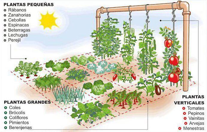 Aprenda a fazer uma horta em apenas um metro quadrado | CicloVivo - Plantando Notícias