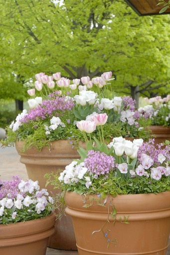 90 Best Pretty Potted Plants Images On Pinterest Container Plants Floral Arrangements And