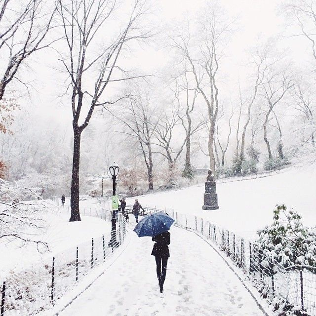 Central Park / photo by Chris Ozer