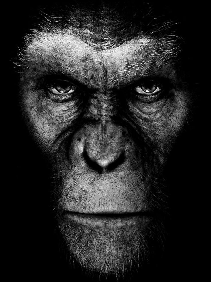 Rise of the planet of the apes - had no expectations and was pleasantly surprised. Emotional and entertaining.