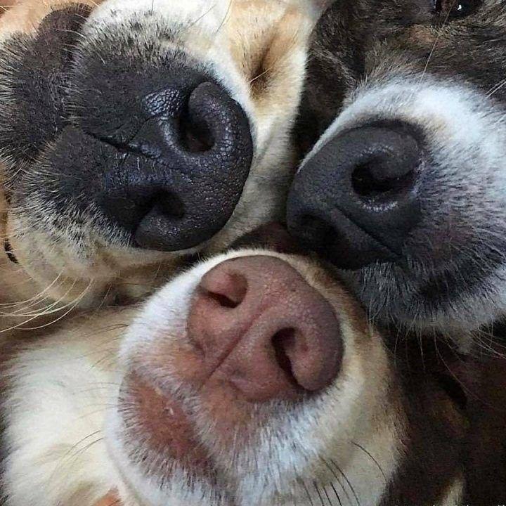 Картинка нос к носу