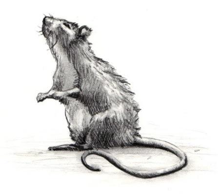 Repel Rats Cat Litter