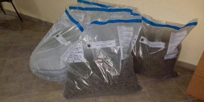 Sekuestrohen 26 kg kanabis në Vlorë
