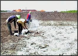 Liming Right Solution In Acid Soils As Rainy Season. http://goo.gl/By11Sv