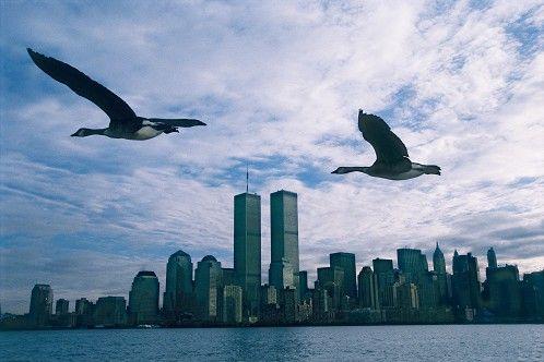 Photo Twin Towers - Le peuple migrateur - Mathieu Simonet