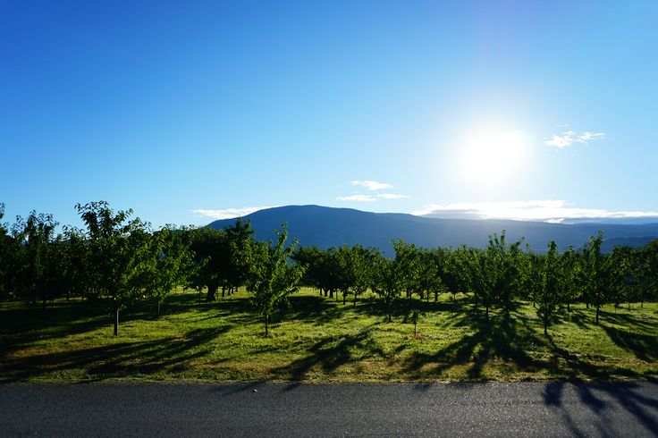 Orchard morning view
