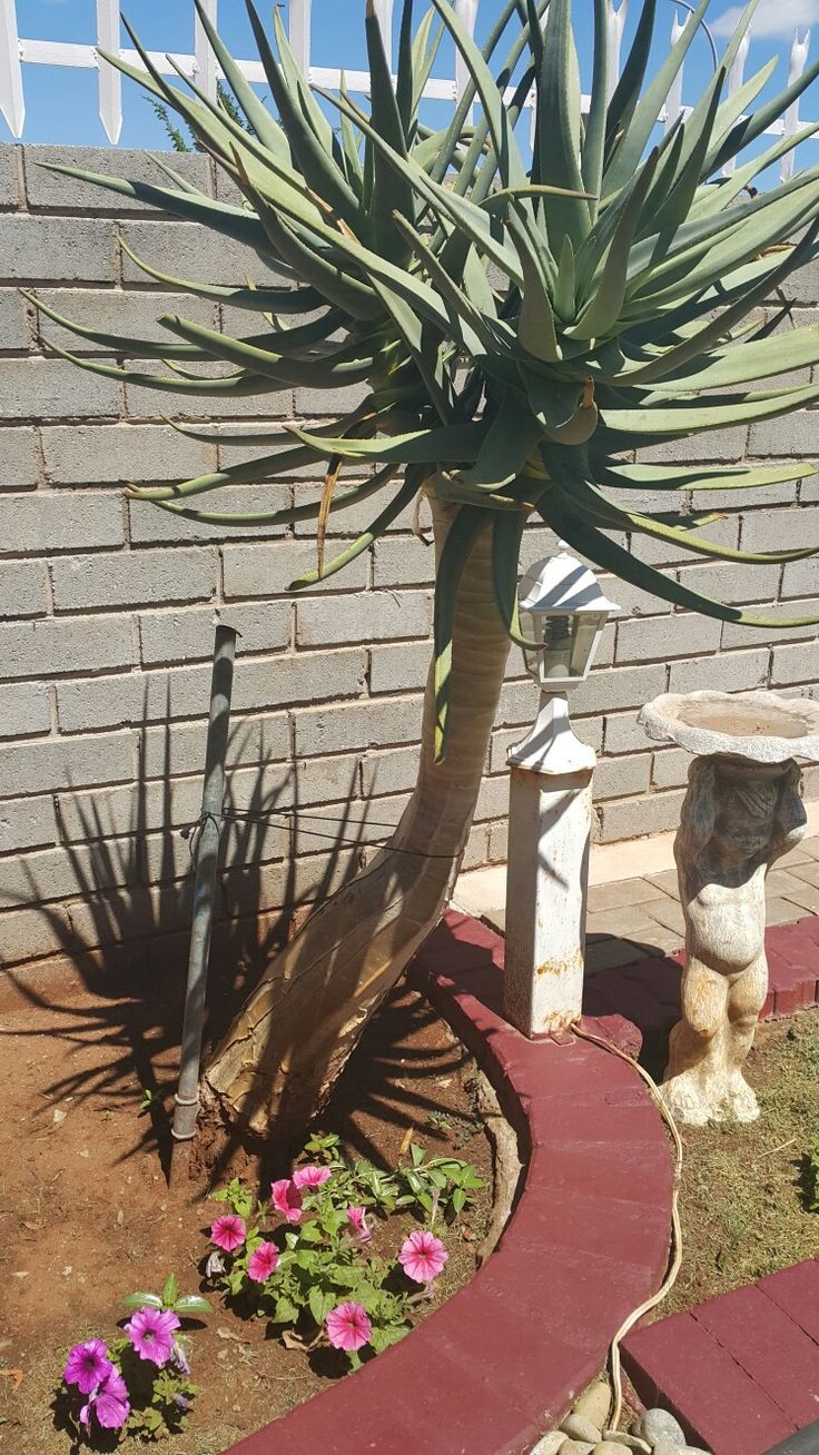 Surviving in the harsh climate of the Northern Cape.