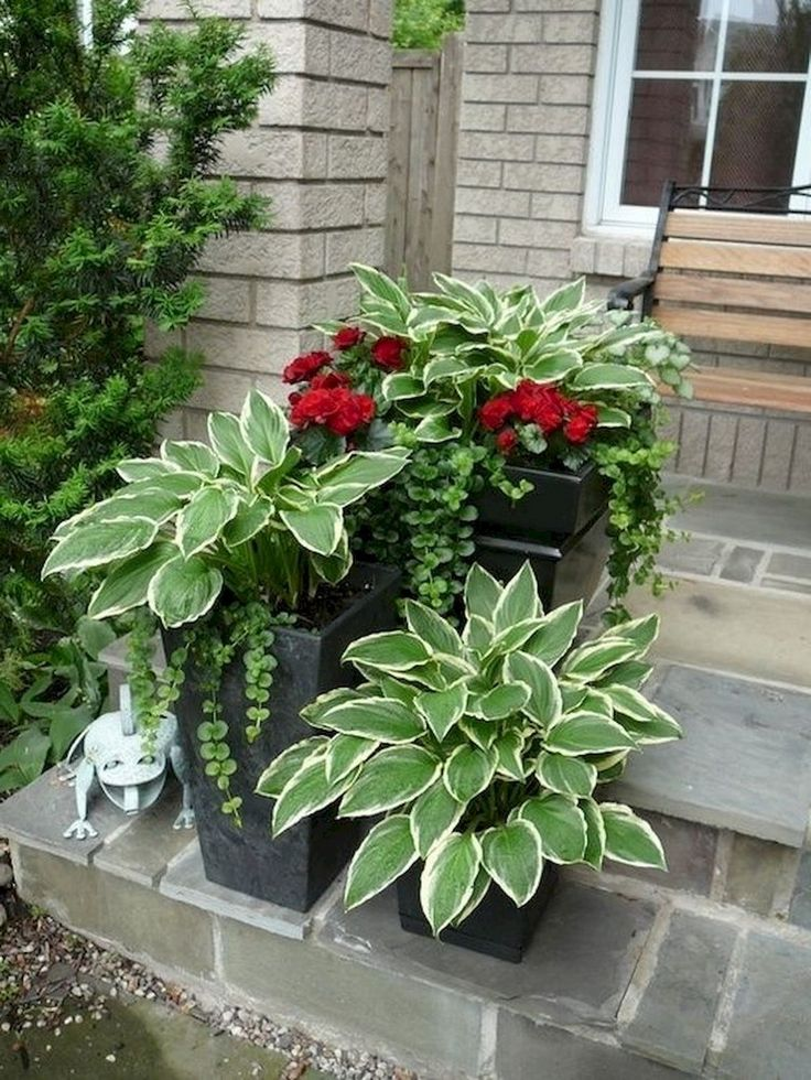 45+ Stunning Container Gardening Concepts