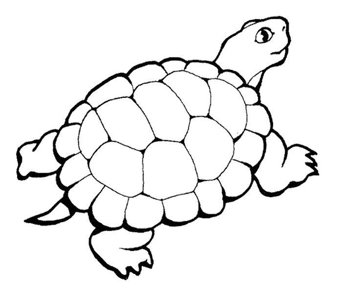 38 best Turtle coloring pages images on Pinterest