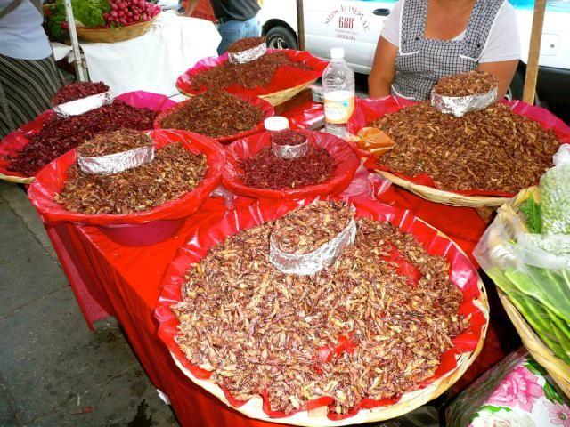 Venta de chapulines tostados en los mercados de Oaxaca