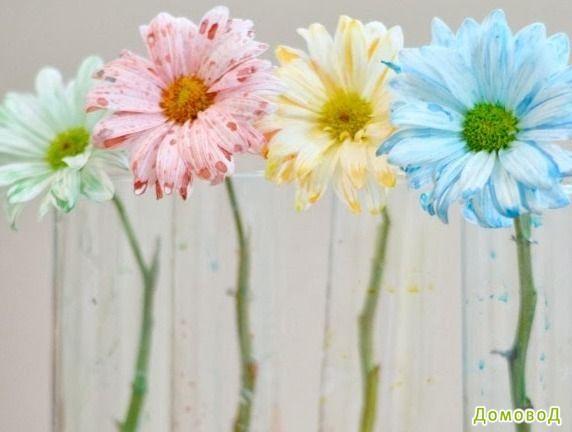 Опыты для детей: Разноцветные цветы
