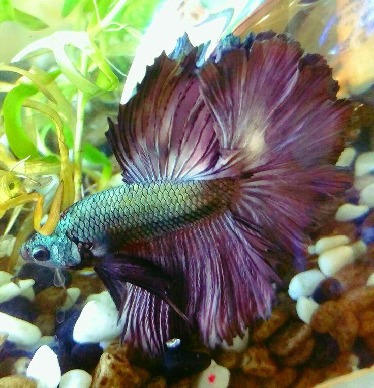 4212 best Aquariums images on Pinterest | Betta, Betta ...  4212 best Aquar...