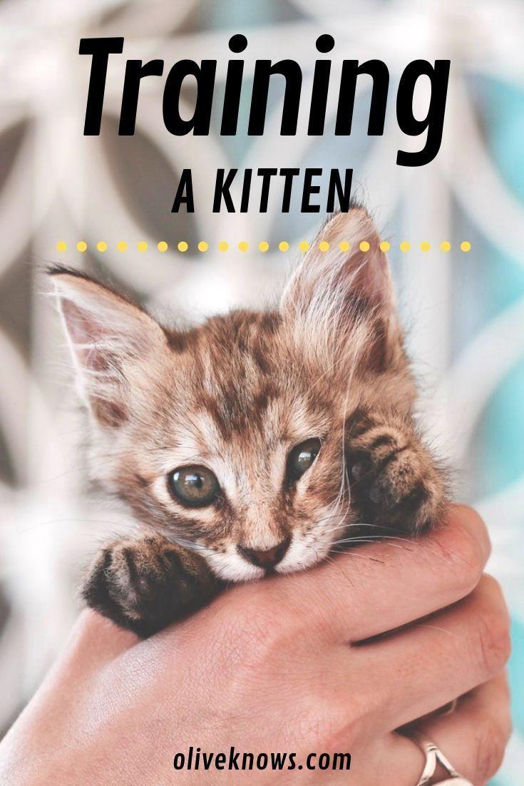 How To Train A Kitten Oliveknows Training A Kitten Kitten Care Cat Training