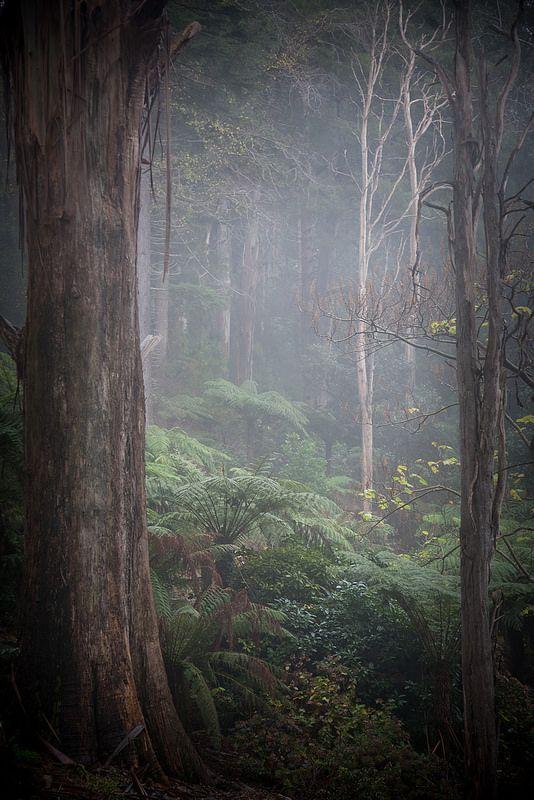 Dandenong Ranges, Australia