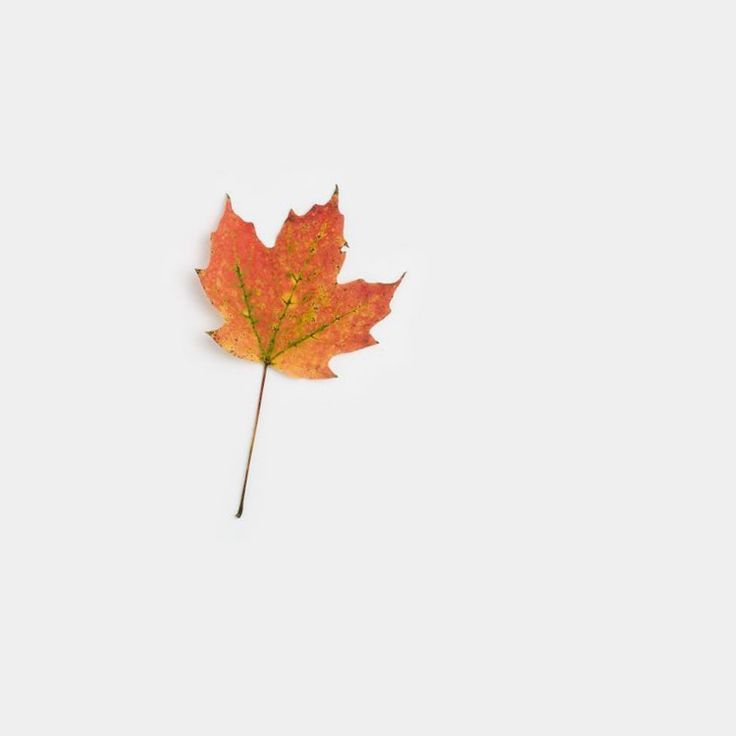 September 23 First Day of Fall 2015: The Autumnal Equinox.