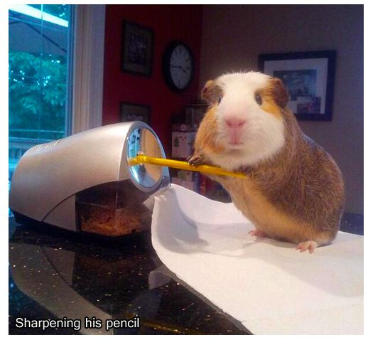 """He's super helpful. He sharpens pencils for you. 