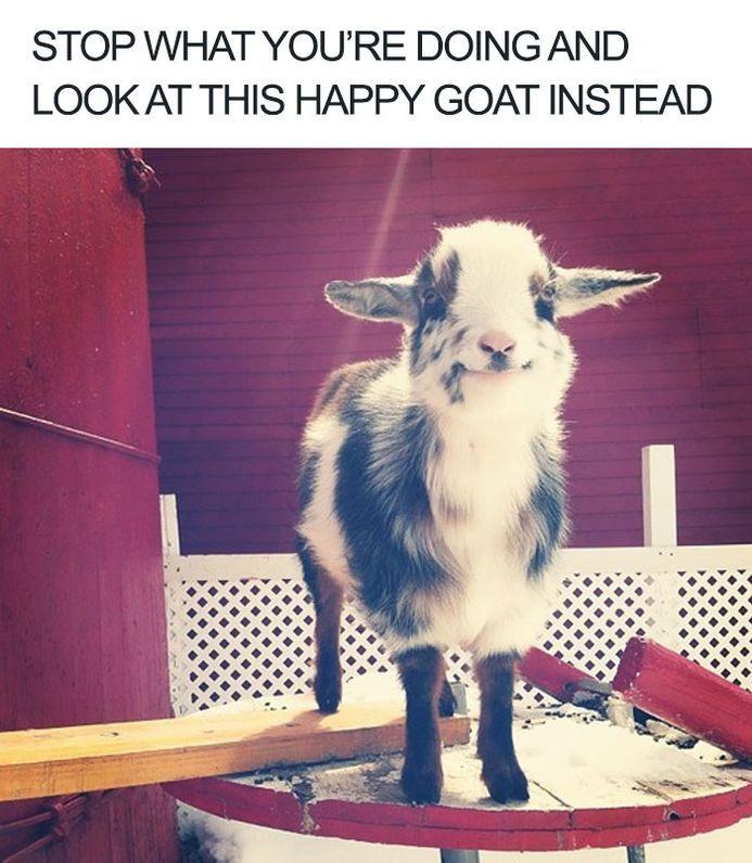 100 Animal Memes To Make You Laugh This Spring