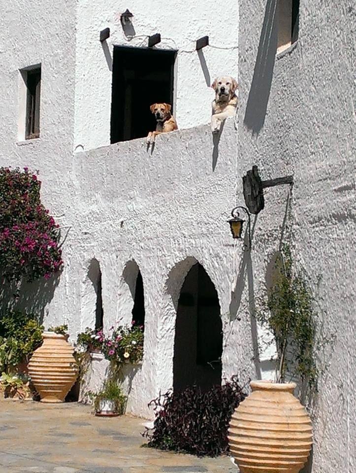Love them dogs @ agistriclub