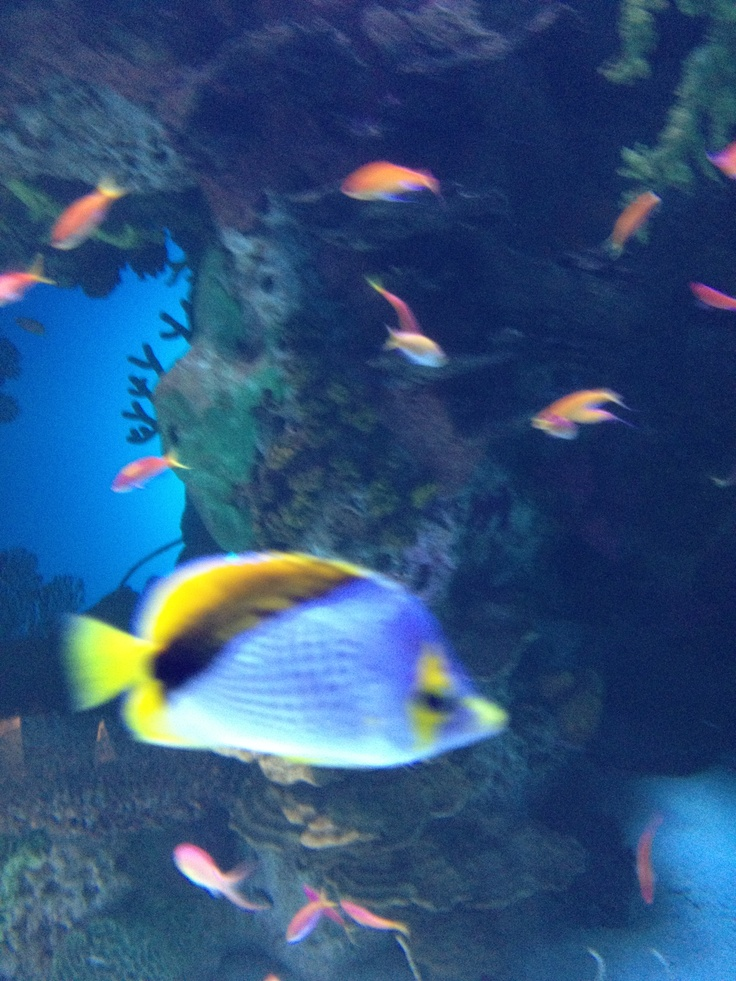 17 best images about georgia aquarium on pinterest for Georgia freshwater fish