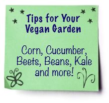 Beginner's Guide to Veganic Gardening