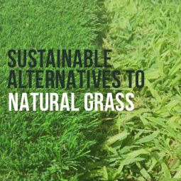 """Want to be part of the """"no-mow"""" movement? Make your lawn beautiful and sustainable with these natural grass alternatives. http://www.heavenlygreens.com/blog/natural-grass-sustainable-alternatives @heavenlygreens"""