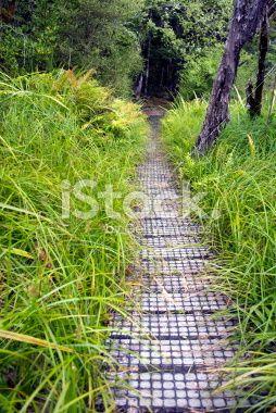 Boardwalk, Nelson Lakes National Park, NZ Royalty Free Stock Photo