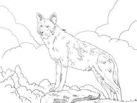 north american wildlife coloring pages north american red wolf coloring page super coloring