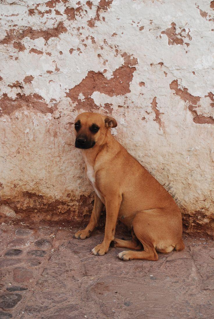 http://www.flickr.com/photos/nacion_quiltro/