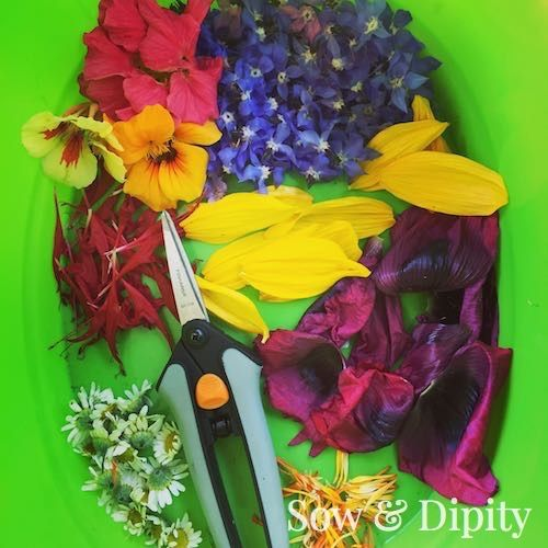 Dry flowers to create fragrant potpourri satchels or even add edible dried flowers to dishes and desserts. Sow & Dipity shows you how.
