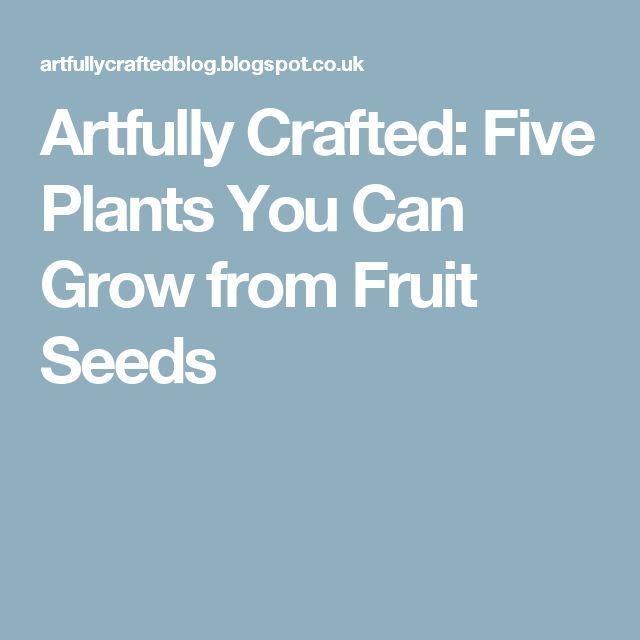 Artfully Crafted: Five Plants You Can Grow from Fruit Seeds