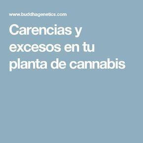 Carencias y excesos en tu planta de cannabis