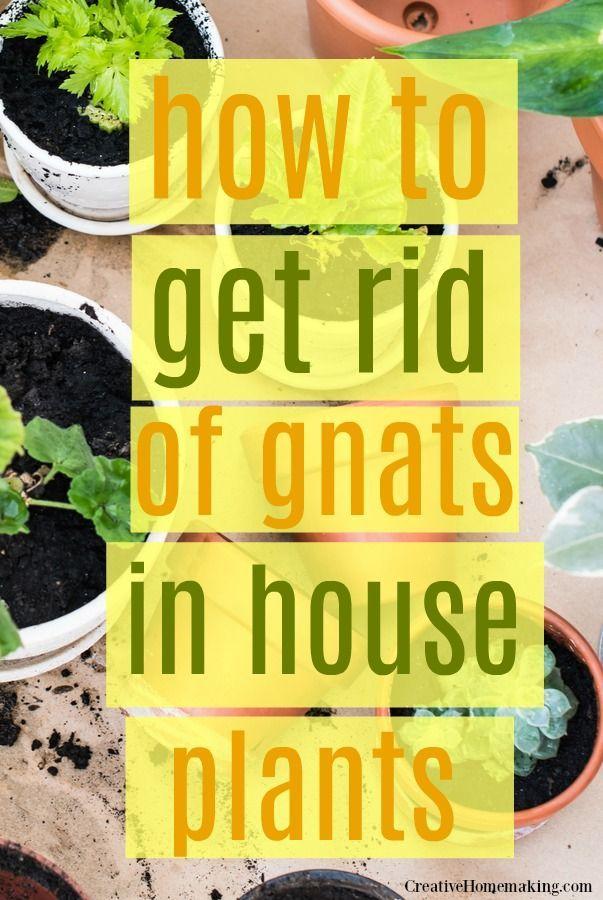 de03cd6f9366cdace817203aa6e3fce1 - How To Get Rid Of Gnats On Indoor House Plants