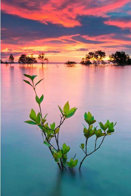 Lake Darwin  Australie