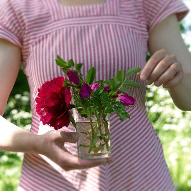 One bouquet per day: Rugosa rose, peony, picked in our garden. Svenska namn: vresros, pion. Deutsche Namen: Kartoffel-Rose, Pfingstrose #onebouquetperday #julianesflowerdiary
