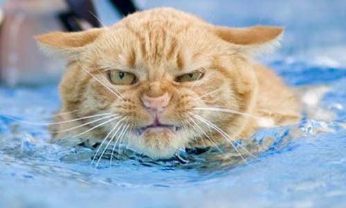 I wouldn't be happy either, Mr.Kitty!: Cats, Animals, Pet, Savory Recipes, Funny Stuff, Funnies, Funny Animal, Kitty