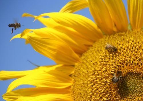 Trentino #Alto #Adige: In #Usa sette tipi di api in lista specie in pericolo (link: http://ift.tt/2f0GrXB )