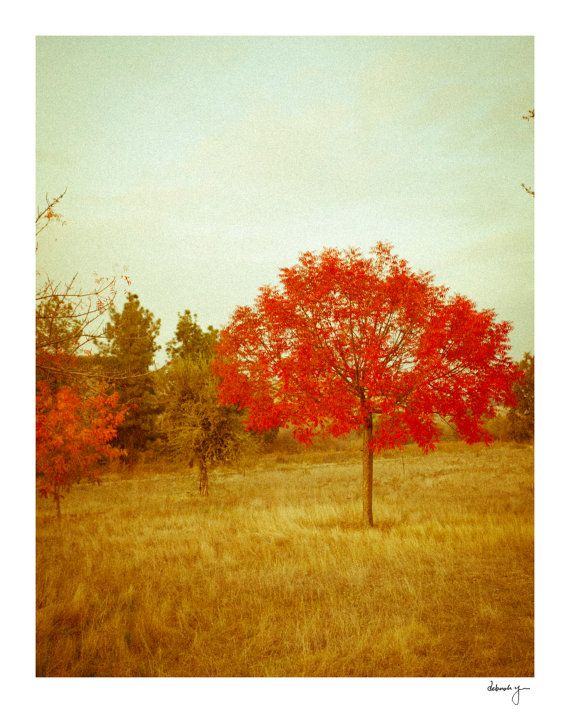 Red Tree Autumn Photography  Classic Fall by YoungSwanDesigns, $30.00