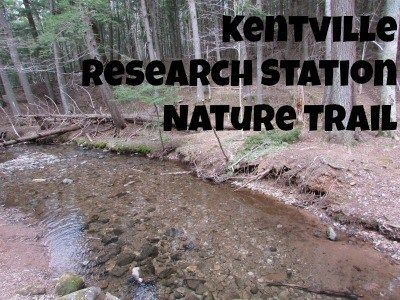 The Kentville Research Station Nature Trail is set in behind the Agricultural centre between Kentville and New Minas. Hikes and Rhododendrons to explore!