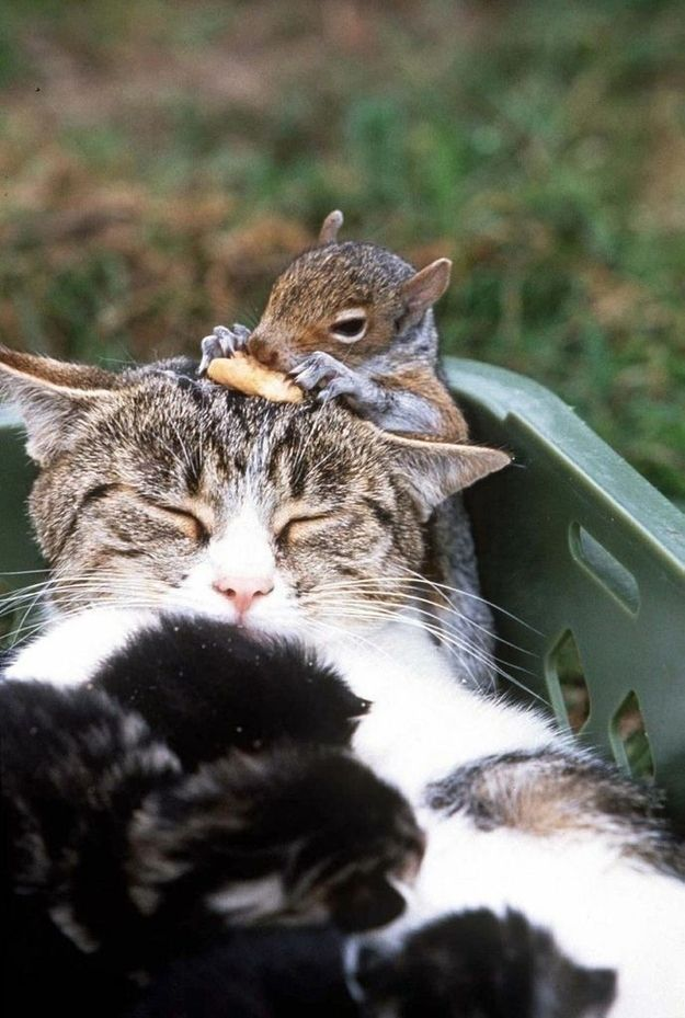 The Cat and Her Squirrel