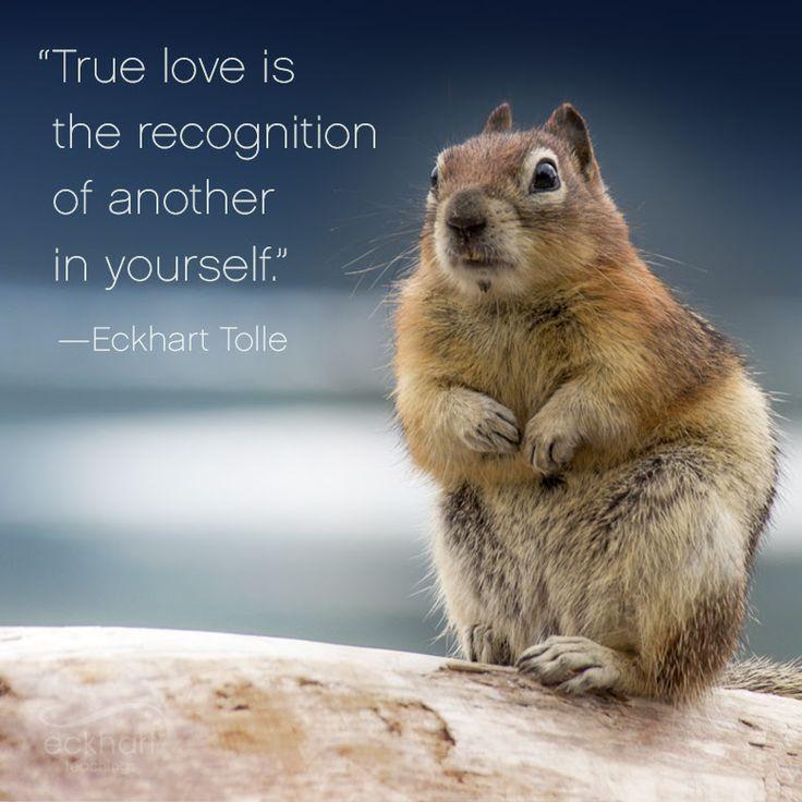 El verdadero amor es reconocer la presencia del otro en ti #pildorarojaparatuser #PresentMomentReminder #eckharttolle