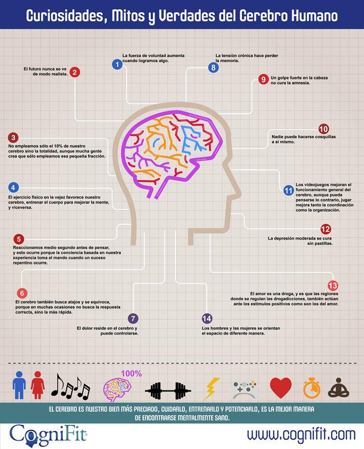 Infografía con 14 curiosidades, mitos y verdades del cerebro humano