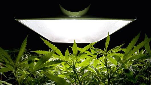 Relaxation of laws means that #cannabis is a growing opportunity   http://www.cnbc.com/2017/01/10/relaxation-of-laws-means-that-cannabis-market-is-a-growing-opportunity-investor.html … #MME #marijuana