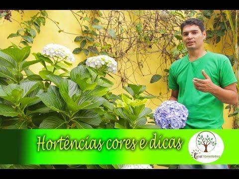 Hortênsias ,Flores e Cores, Dicas de jardinagem para sua casa, qualidade e estilo de vida - YouTube